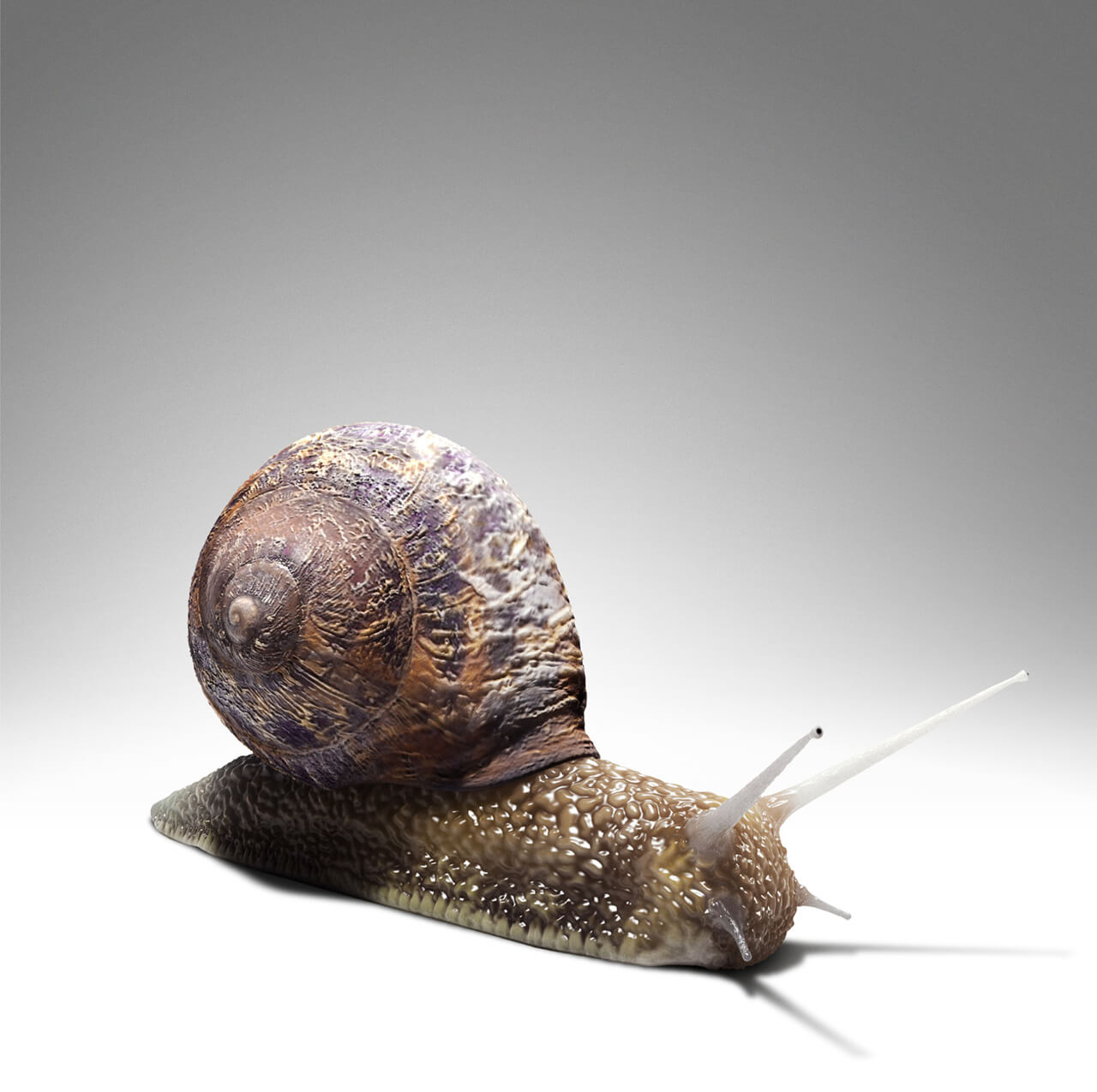 Computer Generated Large Snail Concept