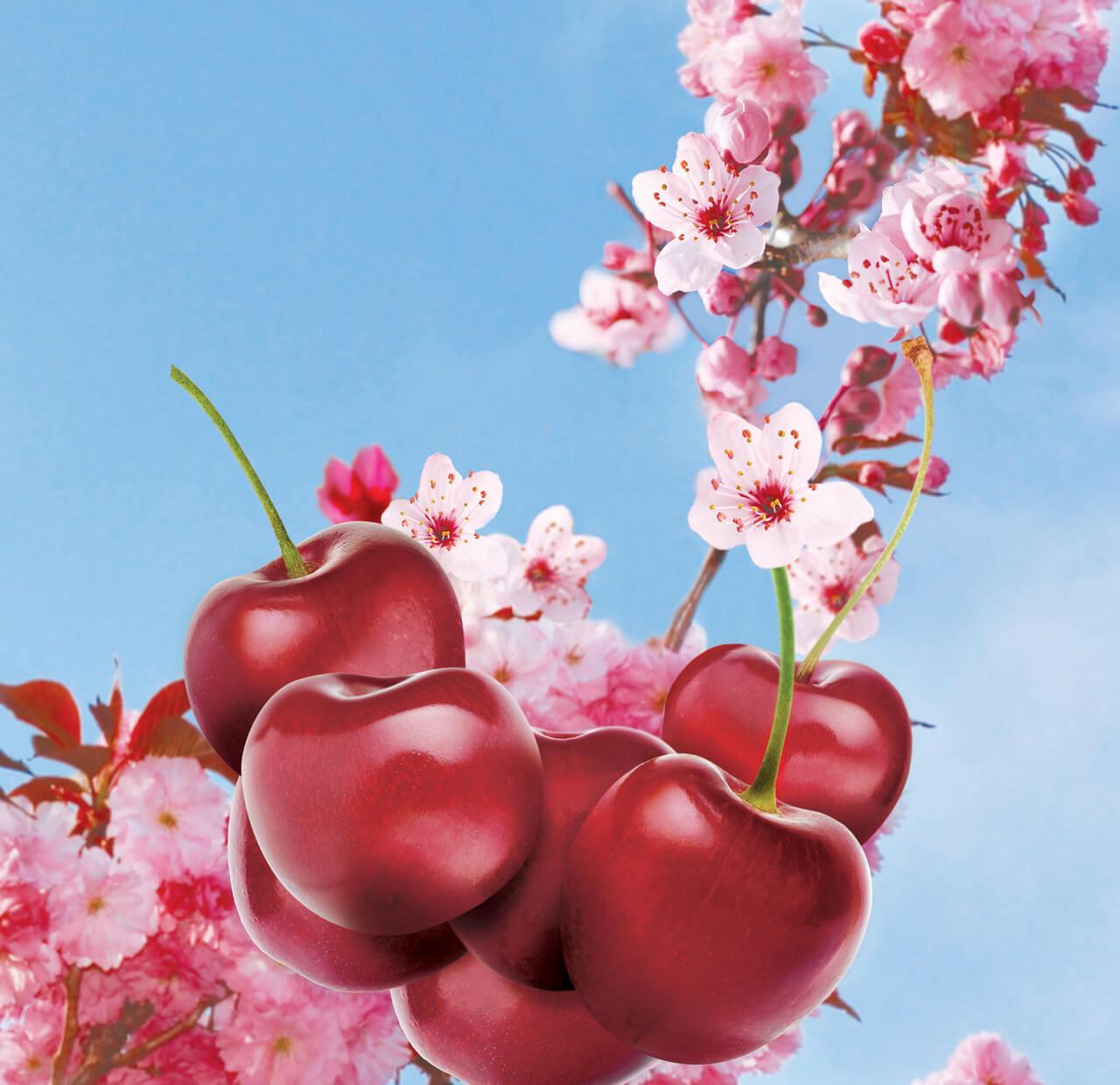 Computer Generated Fuji Cherry Blossom Concept