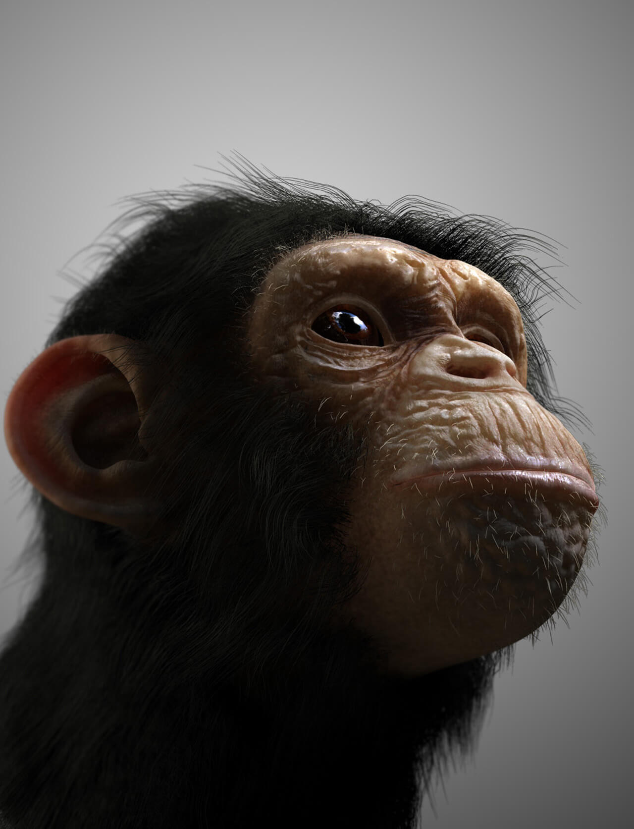 Computer Generated Chimp Concept