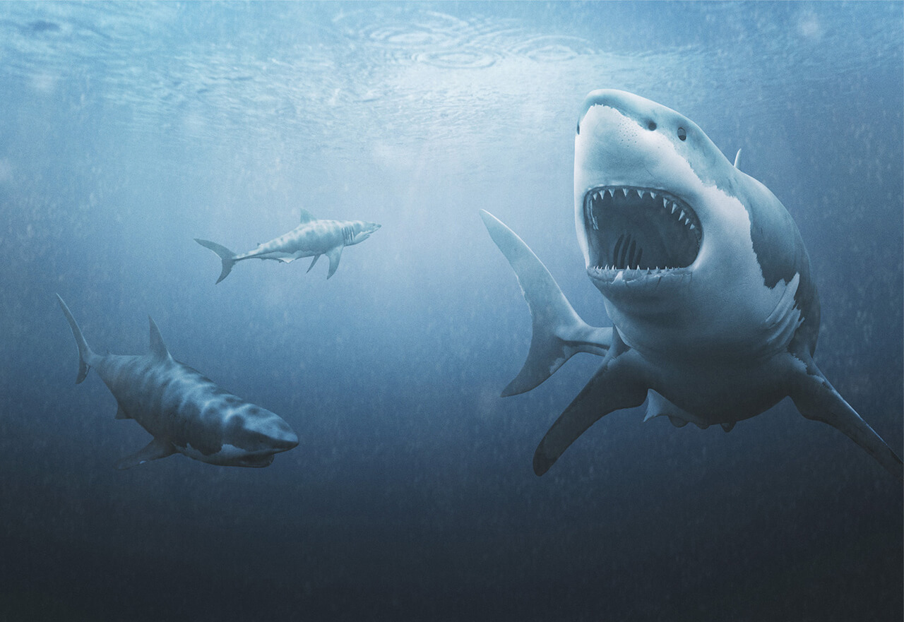 A computer generated Illustration of a great white shark swimming in the ocean with two smaller sharks circling round